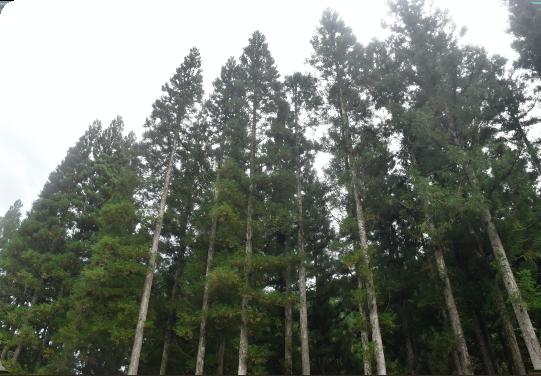 広葉樹って何?のイメージ画像